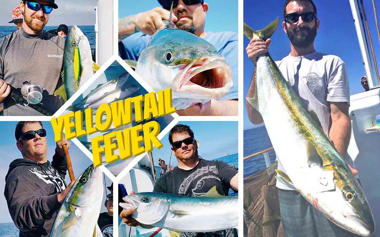 Yellowtail Fishing | Newport Landing Sportfishing in Southern California