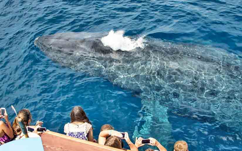 San Diego Whale Watching Cruises Call 949 675 0550