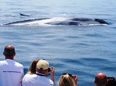 July Whale Watching Long Beach
